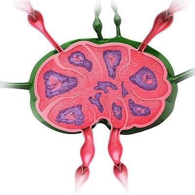 Human Lymph Node Print by Pixologicstudio