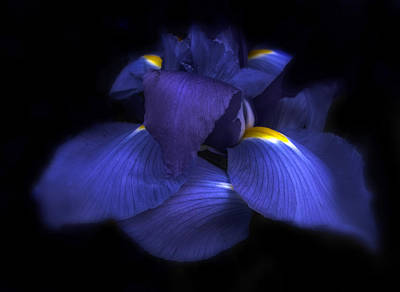 Soft Digital Art - Iris by Jessica Jenney