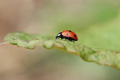 Ladybug Print by Heike Hultsch