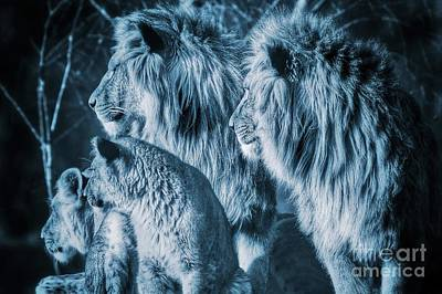 Cat Photograph - Lion Family Close Together Looking In One Direction by Nick  Biemans