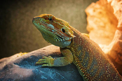 Animals Painting - lizard Bearded Dragon by Celestial Images