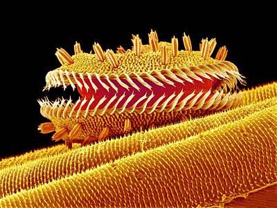 Proboscis Photograph - Moth Proboscis by Susumu Nishinaga