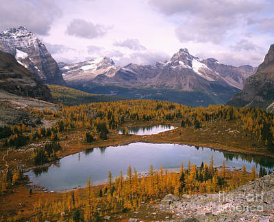 Odaray And Cathedral Mountains Print by Tracy Knauer