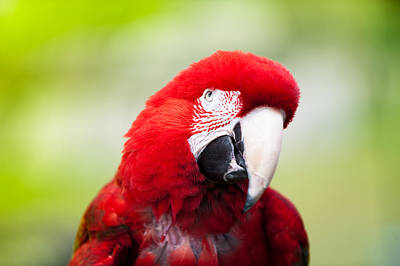 Parrot Photograph - Parrot by Sebastian Musial