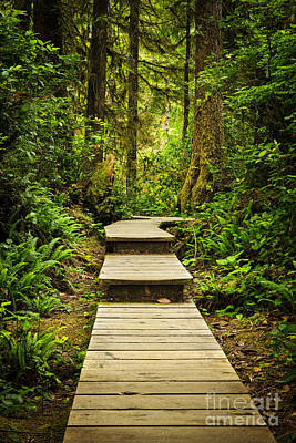 Lush Green Photograph - Path In Temperate Rainforest by Elena Elisseeva