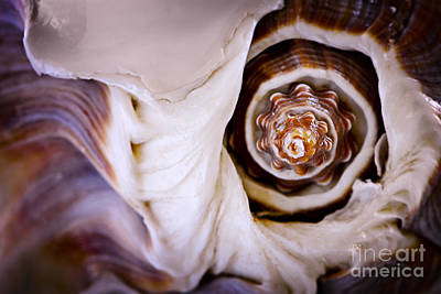 Conch Photograph - Seashell Detail by Elena Elisseeva