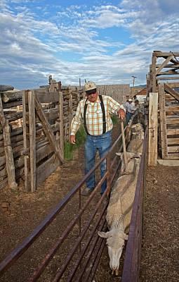 Sheep Farming Print by Jim West