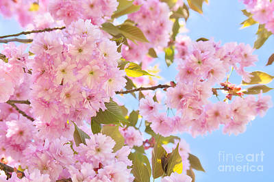Flowers Photograph - Springtime by Angela Doelling AD DESIGN Photo and PhotoArt