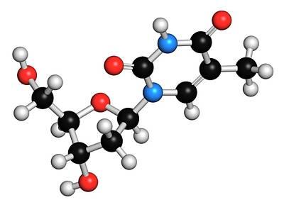 Thymidine Nucleoside Molecule Print by Molekuul