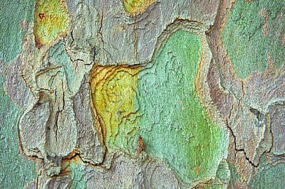 Tree Bark Print by Tom Gowanlock