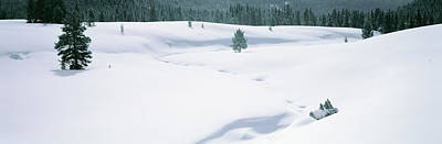 Trees On A Snow Covered Landscape Print by Panoramic Images