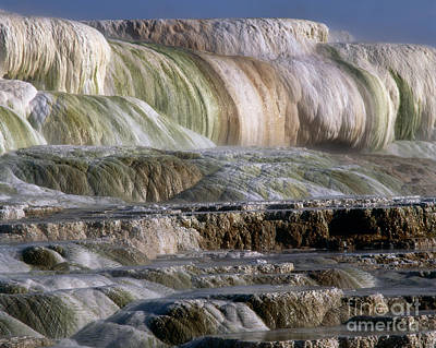 Upper Terrace At Mammoth Hot Springs Print by Tracy Knauer
