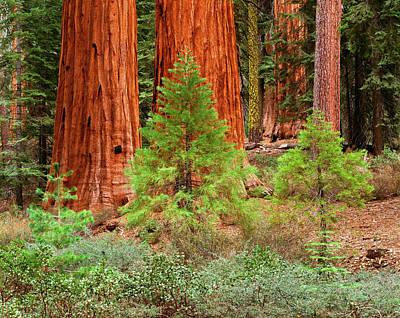 Usa, California, Yosemite National Print by Adam Jones
