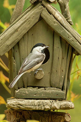 Chickadee Photograph - Usa, North Carolina, Guilford County by Jaynes Gallery