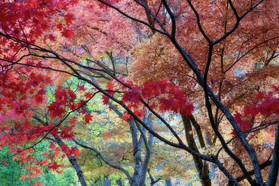 Vivid Fall Colors Photograph - Usa, Oregon, Ashland by Jaynes Gallery