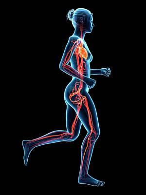 Vascular System Of Runner Print by Sebastian Kaulitzki