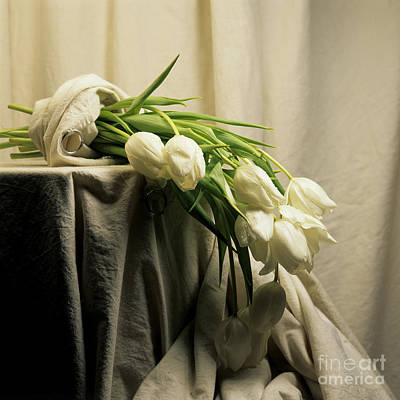White Tulips Print by Bernard Jaubert