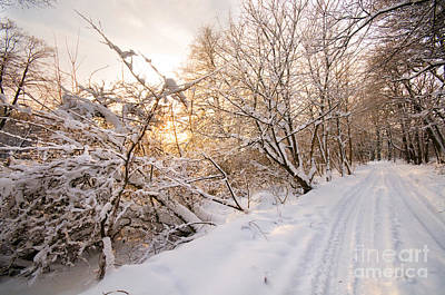 Background Photograph - Winter White Forest by Michal Bednarek