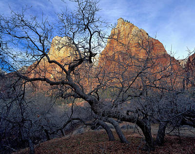 Slickrock Photograph - Zion National Park, Utah by Scott T. Smith