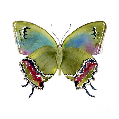 Lime Green Painting - 46 Evenus Teresina Butterfly by Amy Kirkpatrick