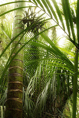 Growth Photograph - Jungle by Les Cunliffe