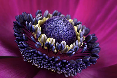 Anemone Print by Mark Johnson