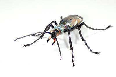 Glass Blowing Photograph - Beetle by Tomasz Litwin