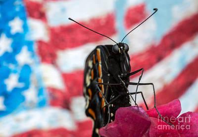 Designs With Photograph - Black Swallowtail by Iris Richardson
