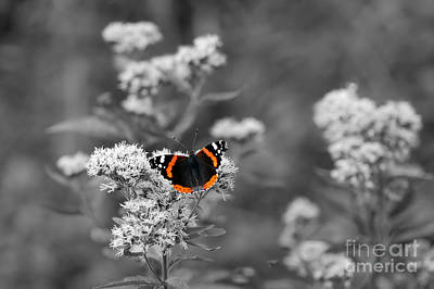 Butterfly Photograph - Butterfly by Michal Bednarek