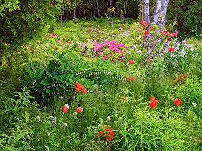 Canada, New Brunswick, Garden And Forest Print by Jaynes Gallery