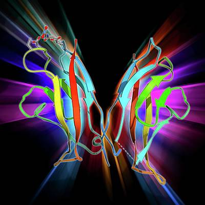 Molecular Structure Photograph - Cell Adhesion Protein Molecule by Laguna Design