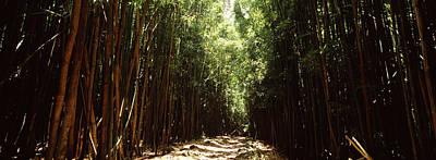 Bamboo Forest Photograph - Dirt Road Passing Through A Forest by Panoramic Images