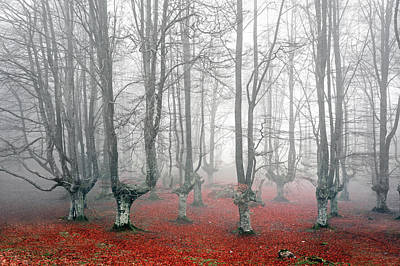 Fantasy Bark Photograph - Forest With Scary Trees by Mikel Martinez de Osaba