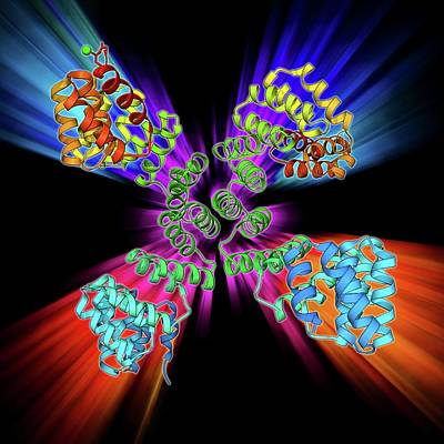 Molecular Structure Photograph - Glycosylation Enzyme Molecule by Laguna Design
