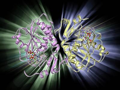 Molecular Structure Photograph - Hgprtase Molecule by Laguna Design