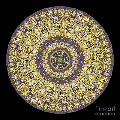 Mandala Photograph - Kaleidoscope Ernst Haeckl Sea Life Series by Amy Cicconi