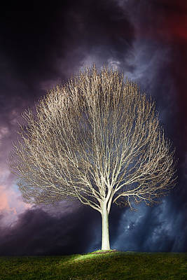 Tree Photograph - Lone Tree by Alexey Stiop