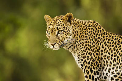 Leopard Photograph - Lovely Leopard by Michele Burgess
