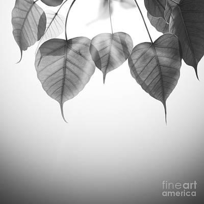 Pho Or Bodhi Original by Atiketta Sangasaeng