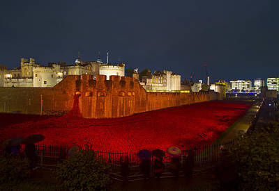 Poppies Tower Of London Night   Print by David French