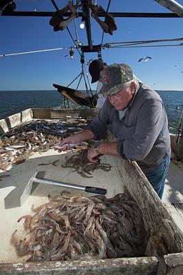 Trawler Photograph - Shrimp Fishing by Jim West