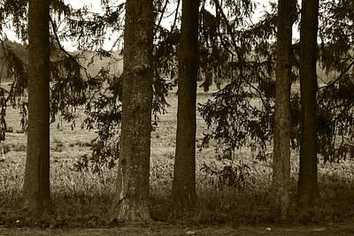 Appleton Photograph - 5 Trees by David Stone