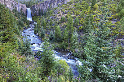 Forest Photograph - Tumalo Falls by Twenty Two North Photography