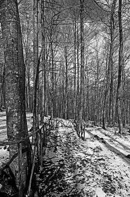 Winter Photograph - Wintertime by George Atsametakis
