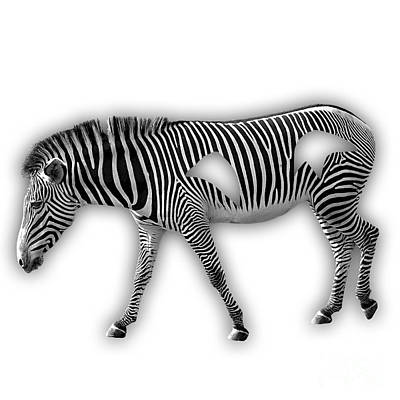 Striped Mixed Media - Zebra Collection by Marvin Blaine