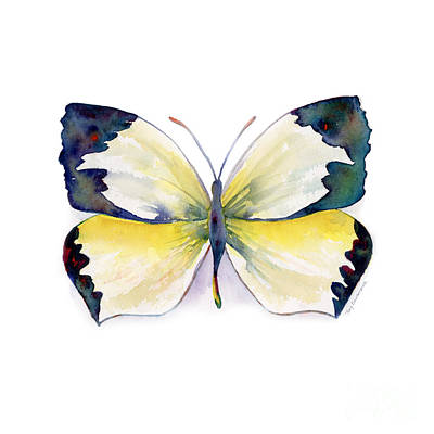 55 Mexican Yellow Butterfly Print by Amy Kirkpatrick