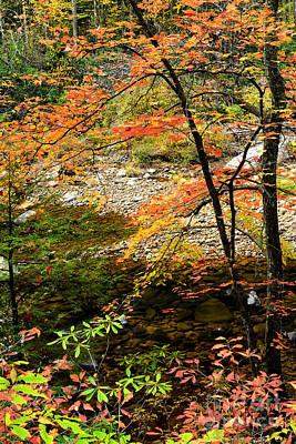Autumn Cranberry River Print by Thomas R Fletcher