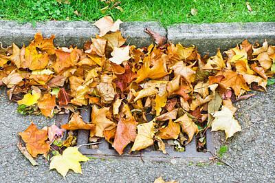 Autumn Leaves Print by Tom Gowanlock