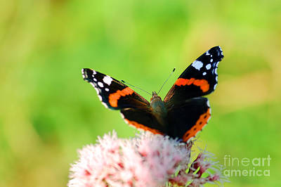 Trees Photograph - Butterfly by Michal Bednarek