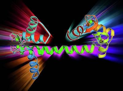 Calcium-binding Protein Molecule Print by Laguna Design